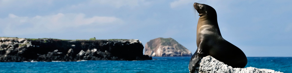 Travel to the Galapagos Islands with Monograms®