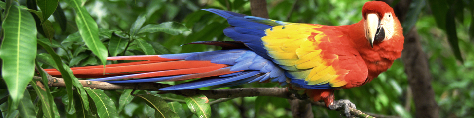 Costa Rica Vacation Packages - Monograms® Travel