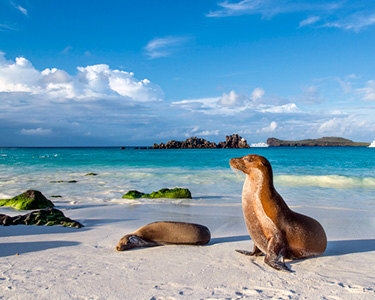2022 Galapagos Islands Packaged Vacations